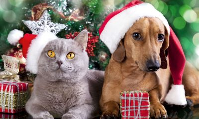 SCARS needs your help to ensure all its animals have a happy Christmas.