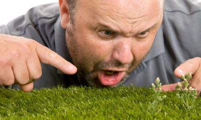 Ashley Robinson's misadventures continue, this time in the garden as he attempts to find the root of a weed choking his grass.